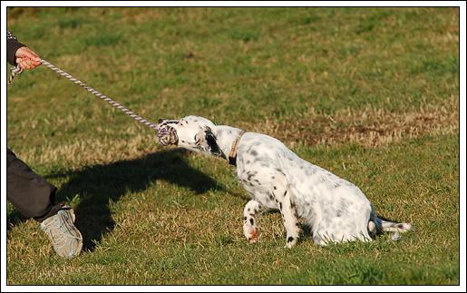 kommando hand hund