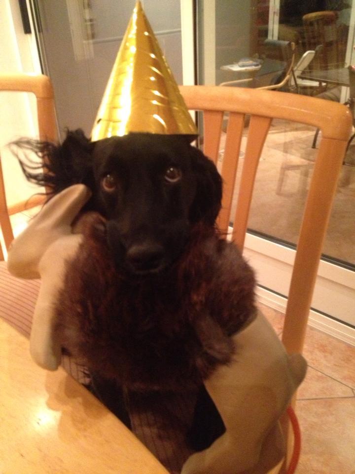 Kats födelsedag