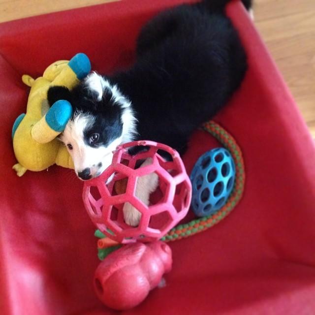 Wilco med leksaker